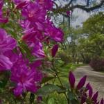 Linda Medine - Afton Villa Gardens
